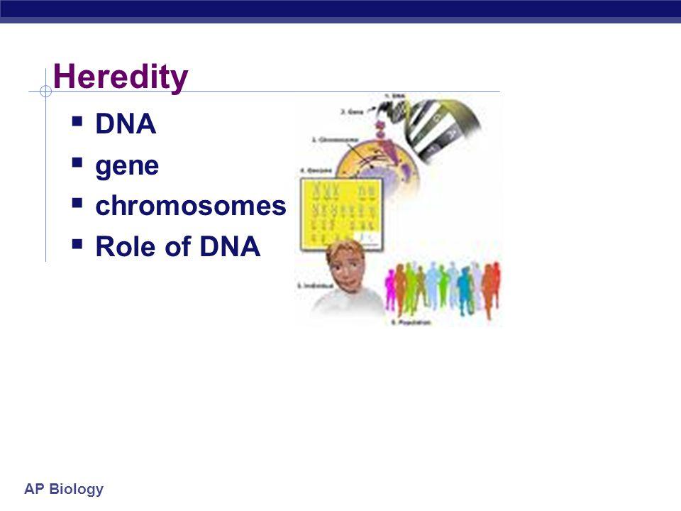 Heredity DNA gene chromosomes Role of DNA