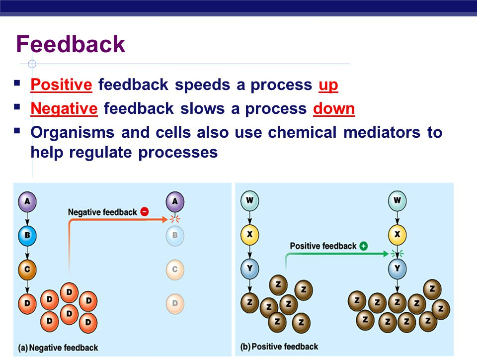 Feedback Positive feedback speeds a process up