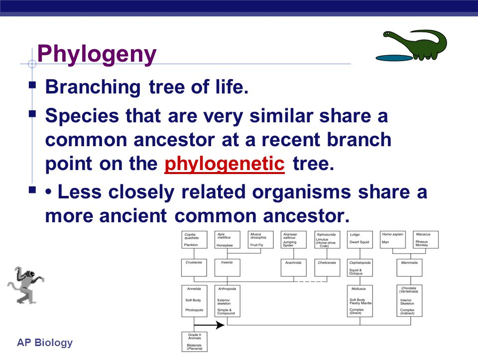 Phylogeny Branching tree of life.