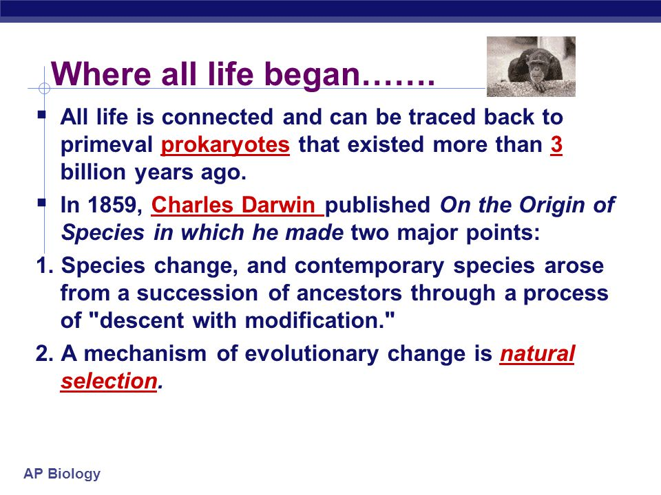 Where all life began……. All life is connected and can be traced back to primeval prokaryotes that existed more than 3 billion years ago.