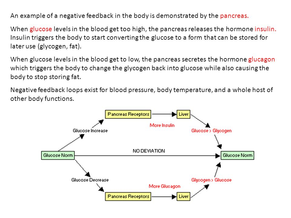 An example of a negative feedback in the body is demonstrated by the pancreas.
