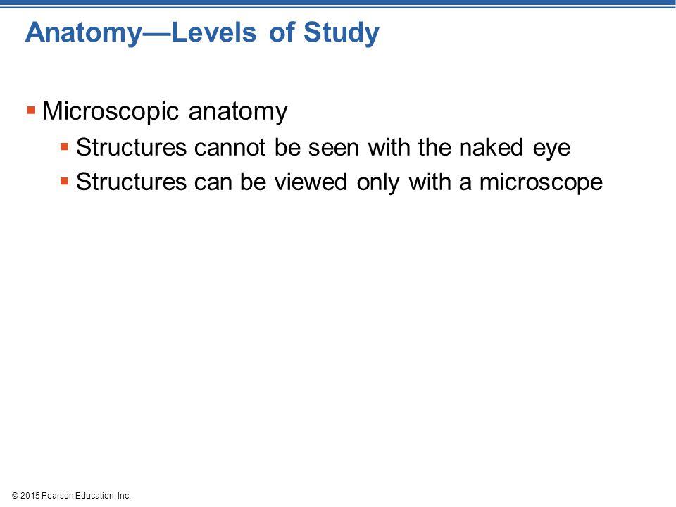 Anatomy—Levels of Study