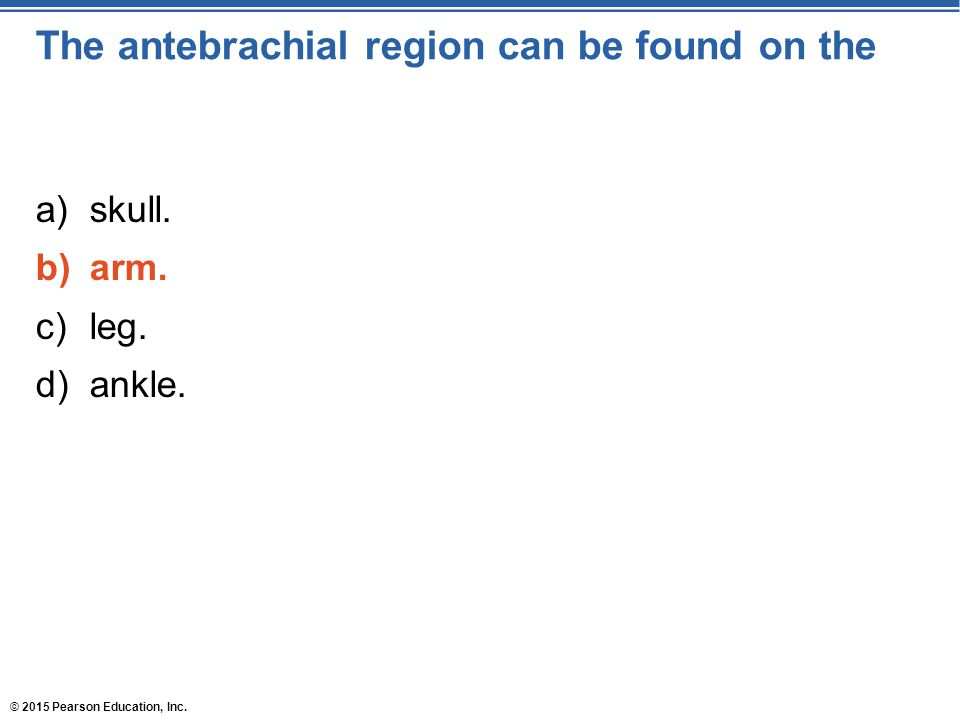 The antebrachial region can be found on the