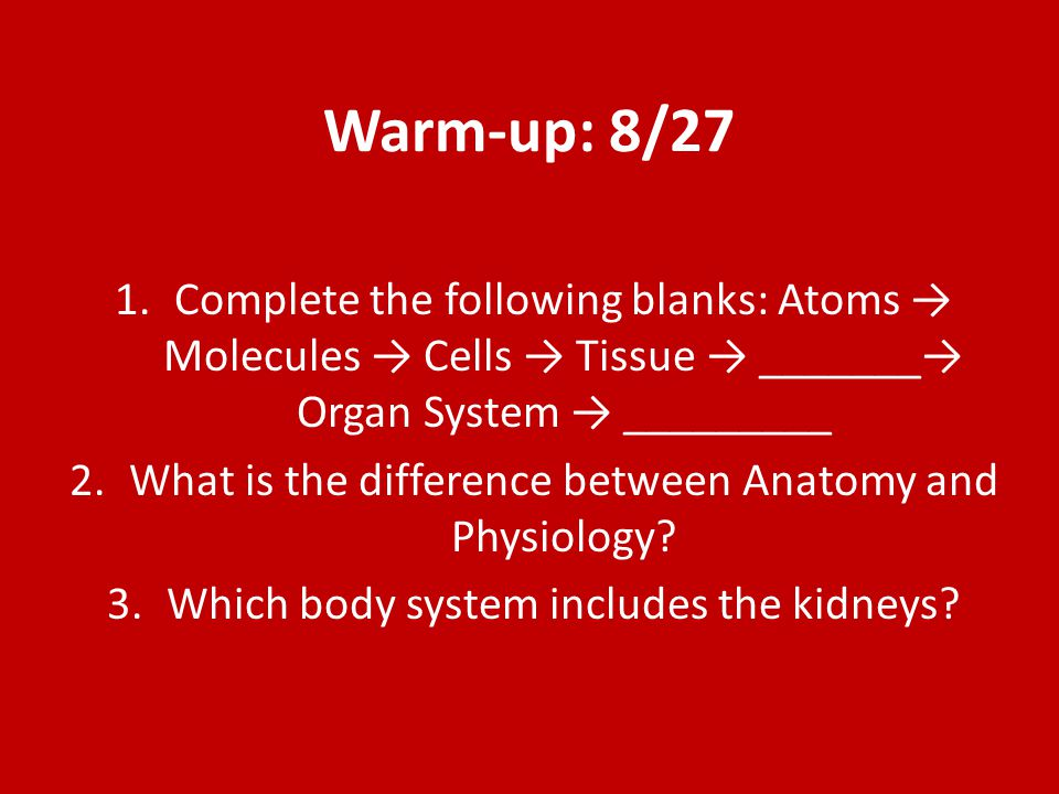 Warm-up: 8/27 Complete the following blanks: Atoms → Molecules → Cells → Tissue → _______→ Organ System → _________.
