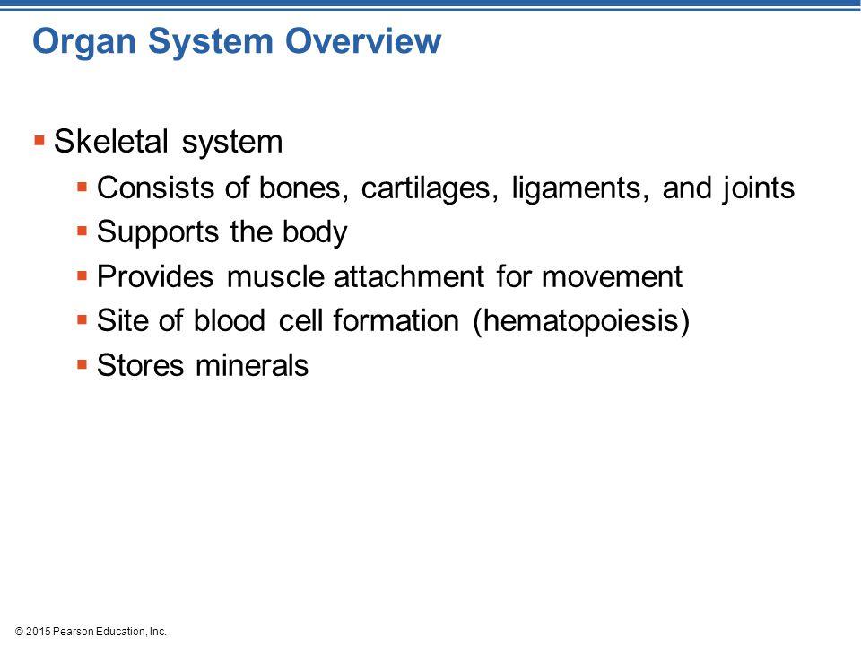 Organ System Overview Skeletal system