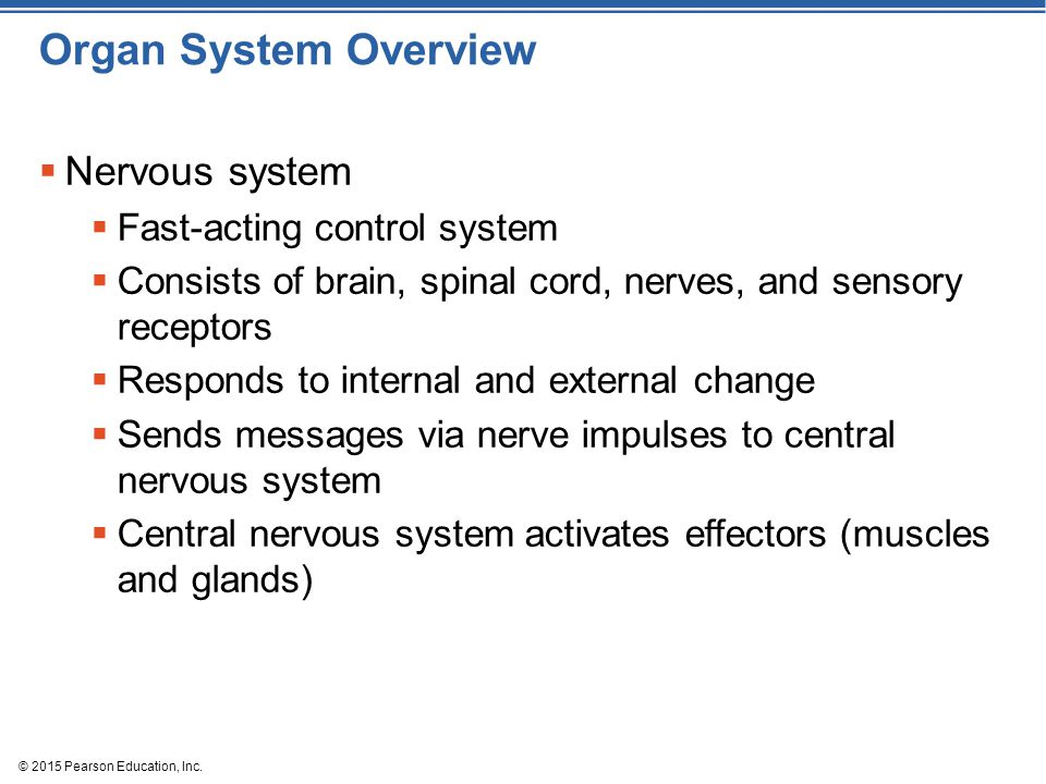 Organ System Overview Nervous system Fast-acting control system