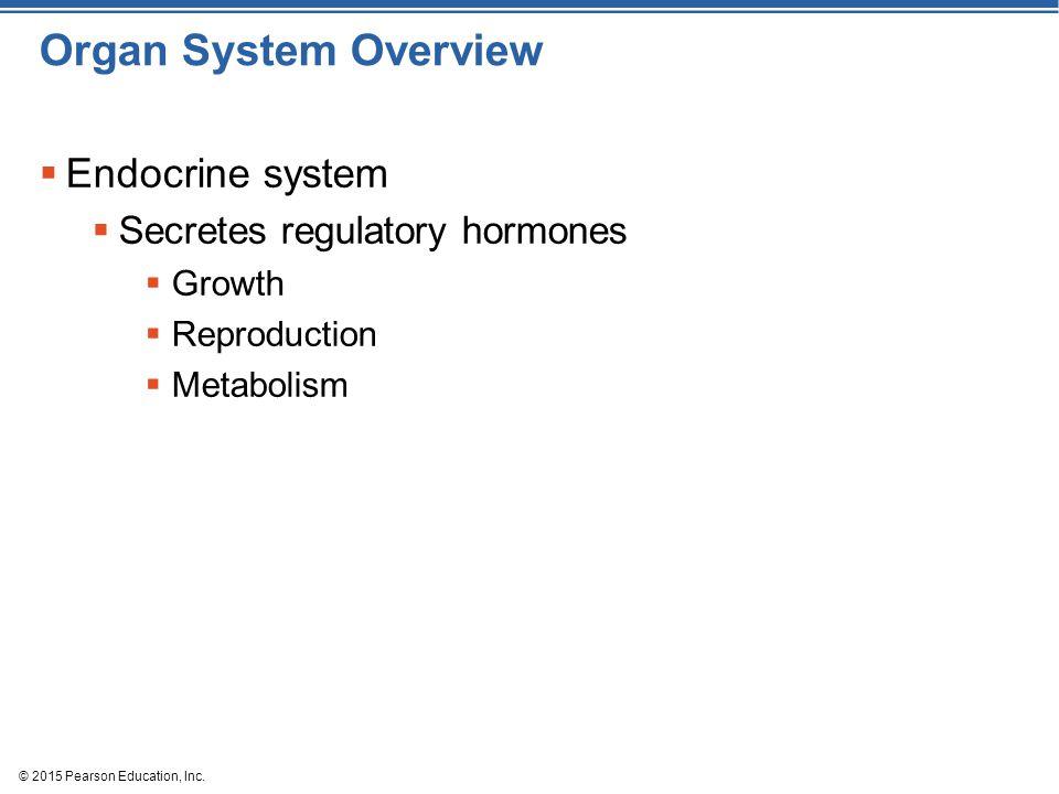 Organ System Overview Endocrine system Secretes regulatory hormones