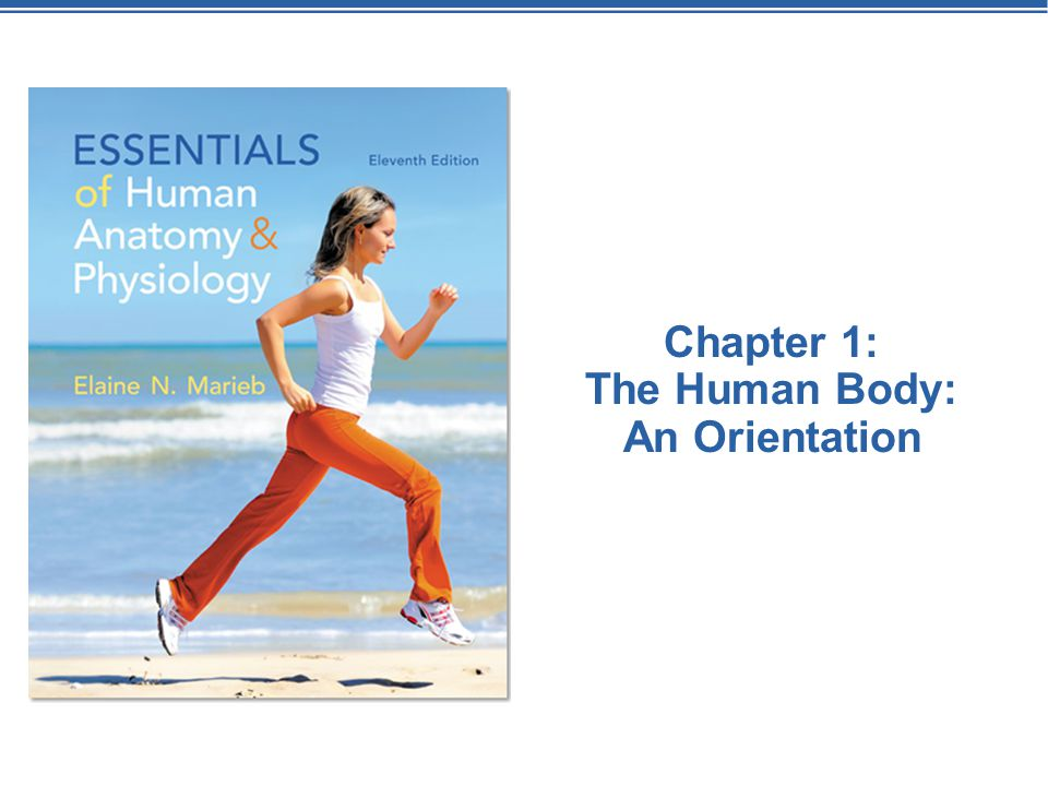 Welcome back to Mrs. M\'s Anatomy & Physiology class! - ppt download