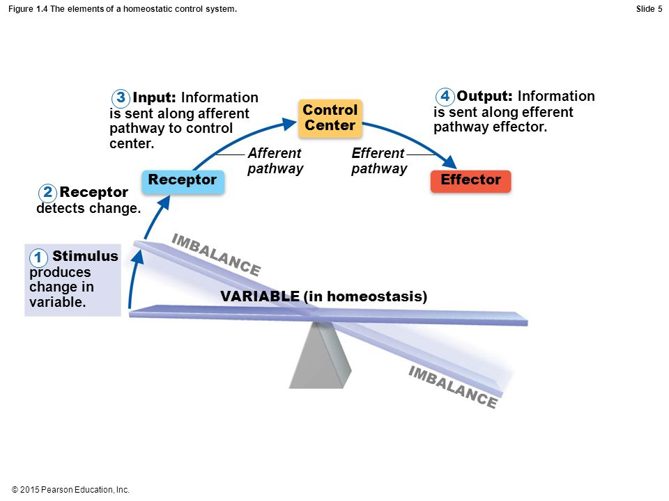Figure 1.4 The elements of a homeostatic control system.