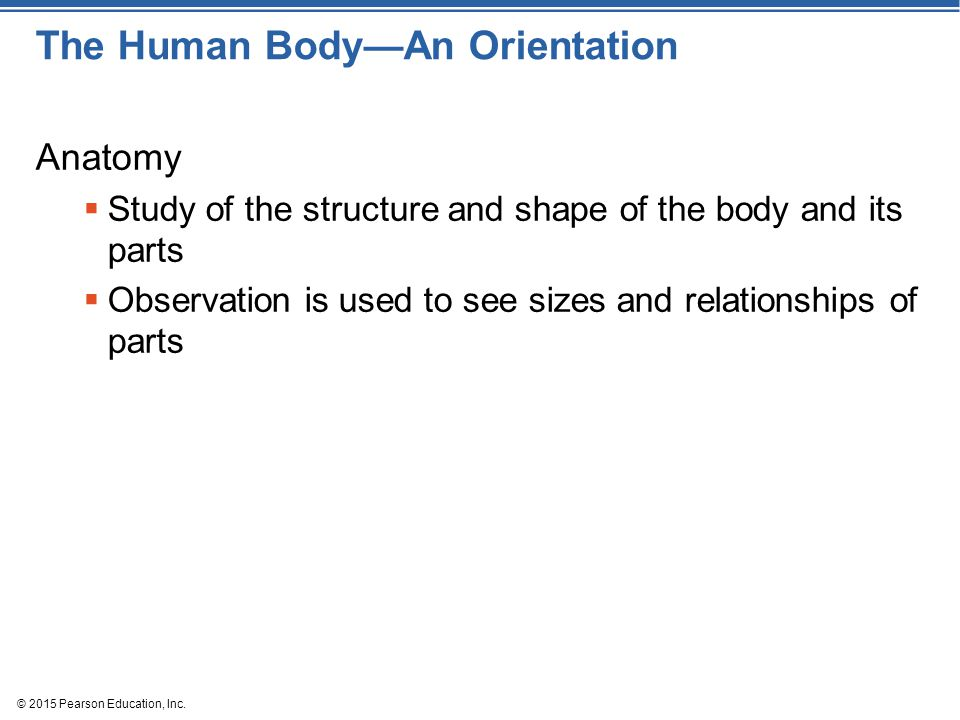 The Human Body—An Orientation