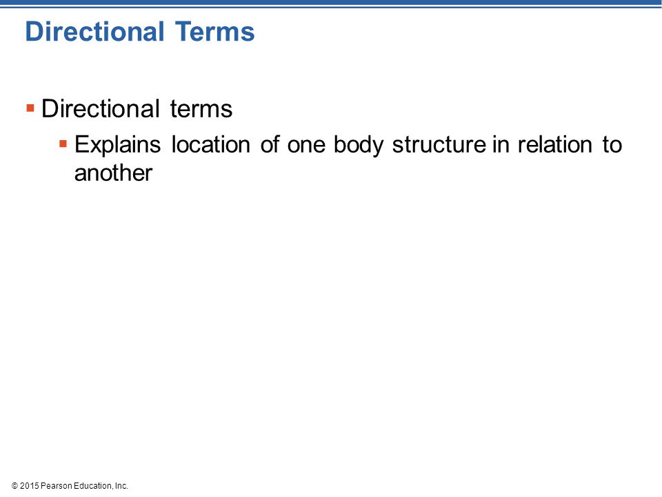 Directional Terms Directional terms