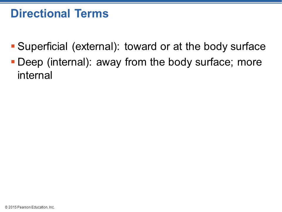 Directional Terms Superficial (external): toward or at the body surface. Deep (internal): away from the body surface; more internal.
