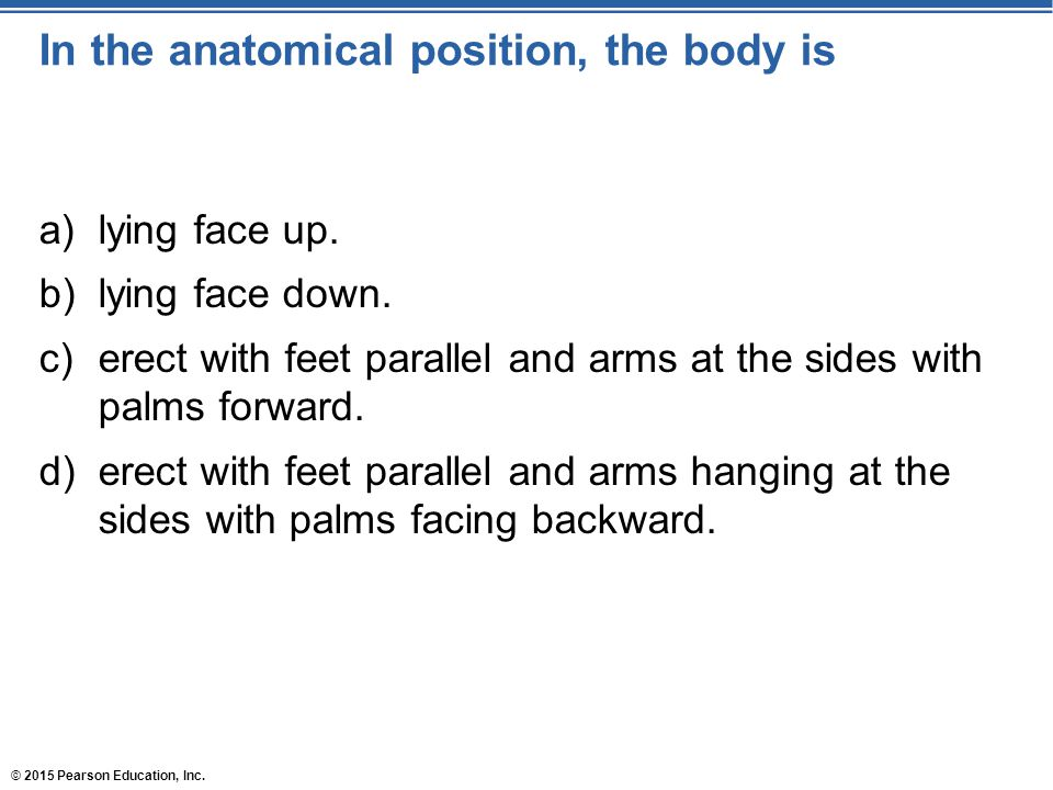 In the anatomical position, the body is
