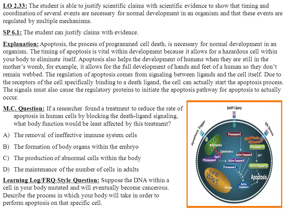 LO 2.33: The student is able to justify scientific claims with scientific evidence to show that timing and coordination of several events are necessary for normal development in an organism and that these events are regulated by multiple mechanisms.