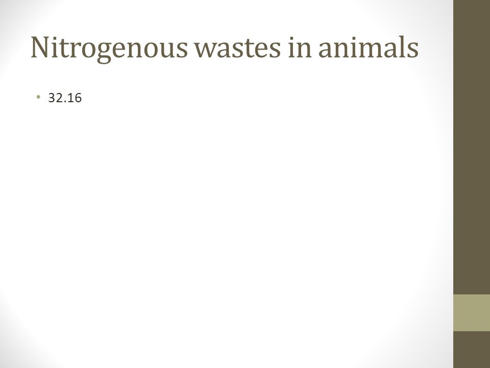 Nitrogenous wastes in animals