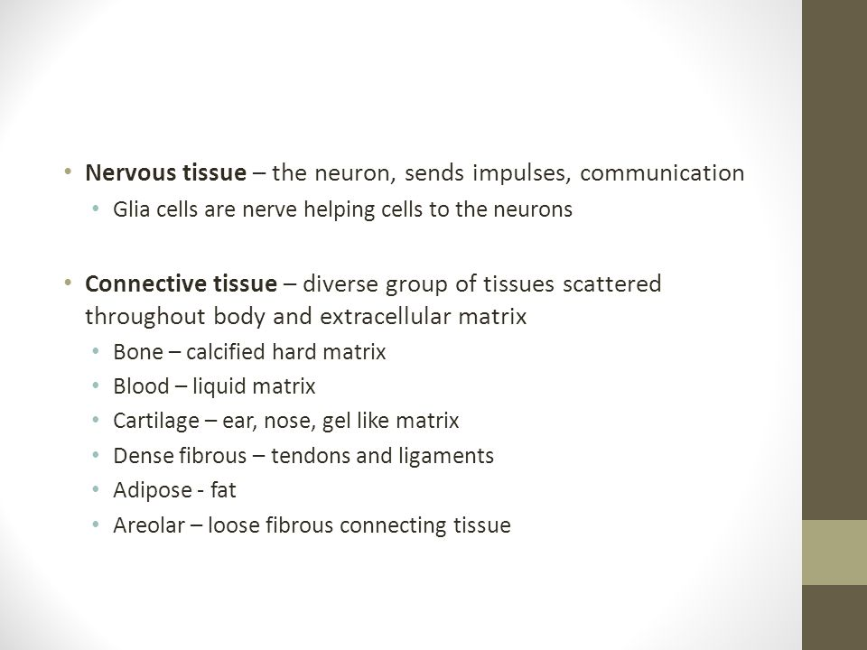 Nervous tissue – the neuron, sends impulses, communication