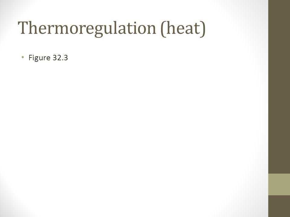 Thermoregulation (heat)