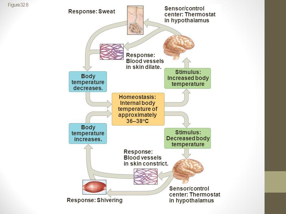 Sensor/control center: Thermostat in hypothalamus Response: Sweat