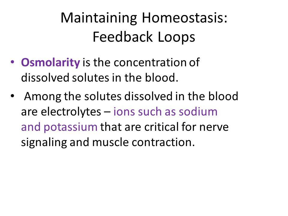 Maintaining Homeostasis: Feedback Loops
