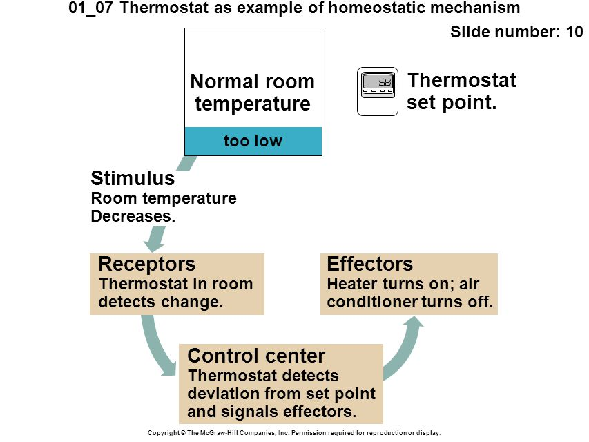 01_07 Thermostat as example of homeostatic mechanism