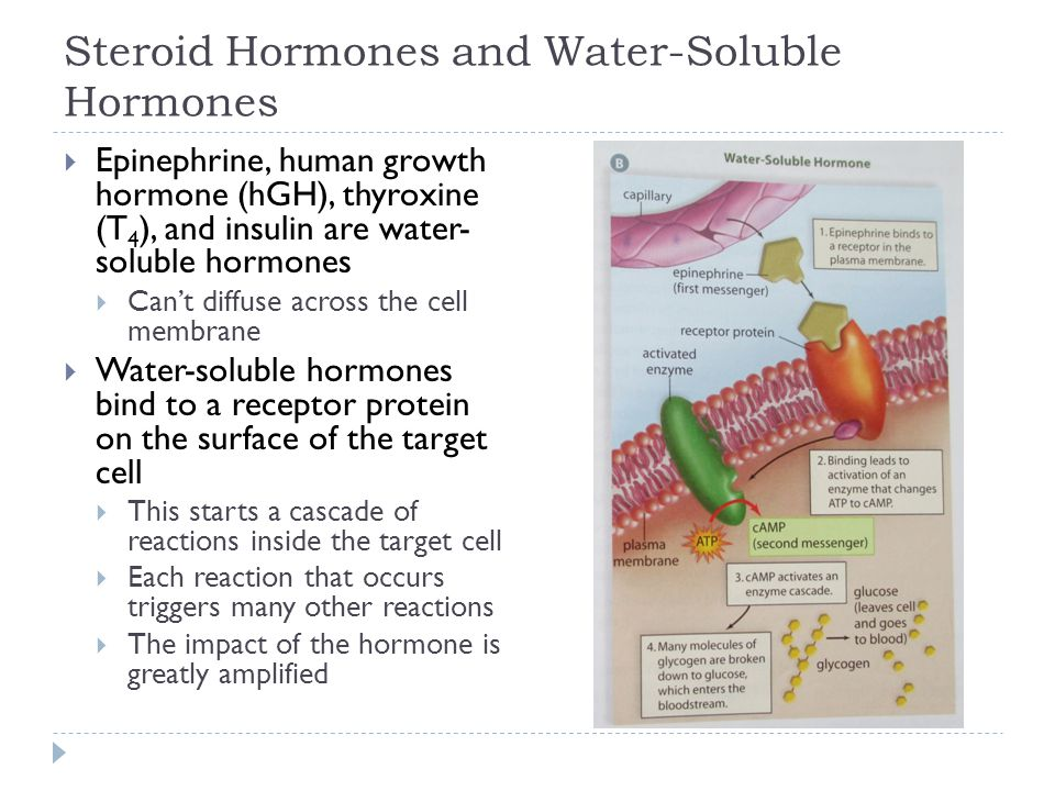 Steroid Hormones and Water-Soluble Hormones