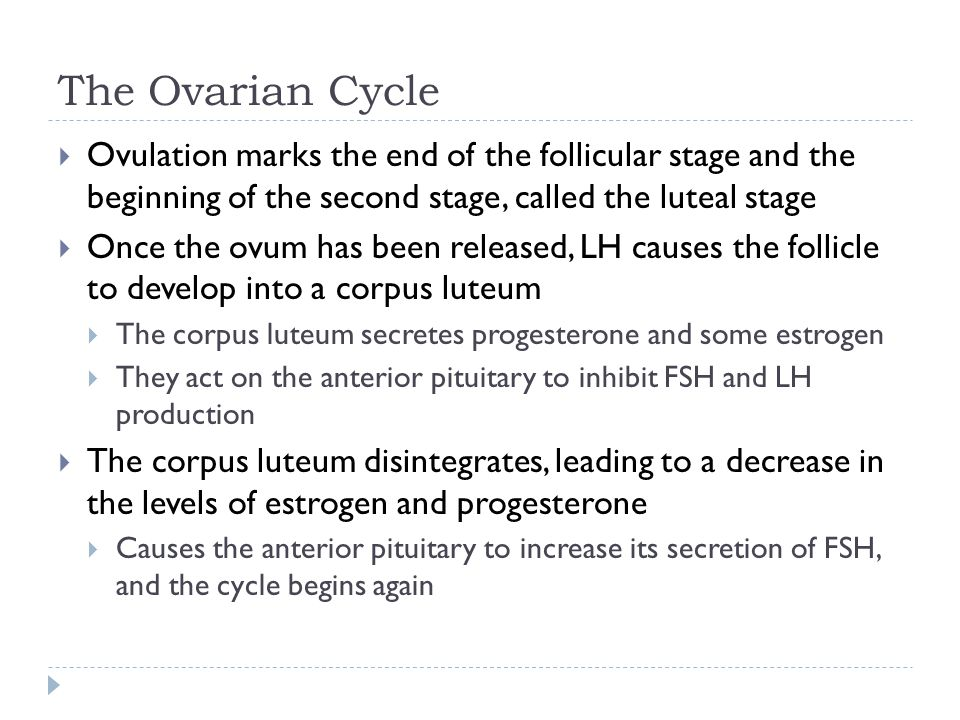 The Ovarian Cycle Ovulation marks the end of the follicular stage and the beginning of the second stage, called the luteal stage.