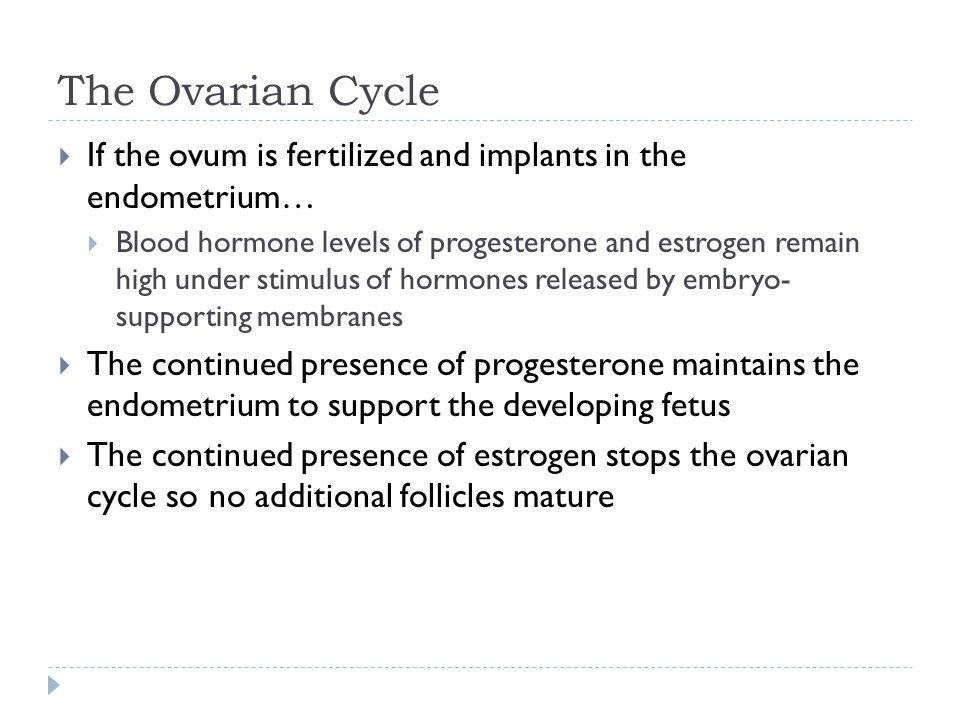 The Ovarian Cycle If the ovum is fertilized and implants in the endometrium…