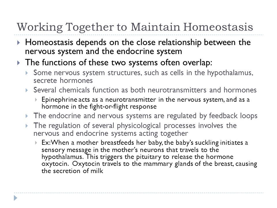 Working Together to Maintain Homeostasis