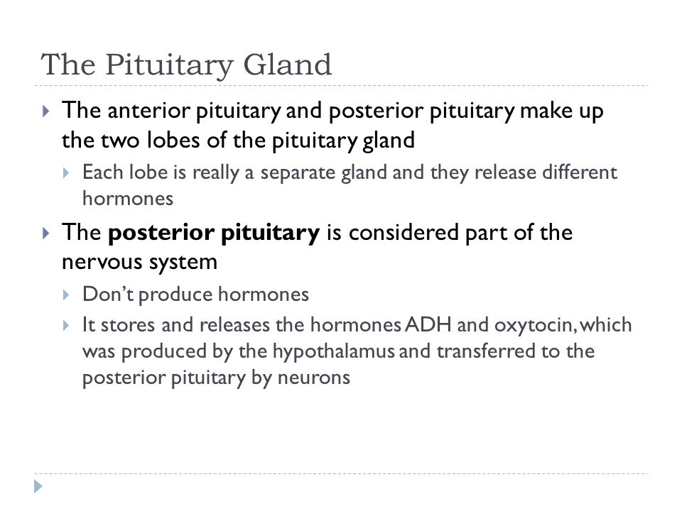 The Pituitary Gland The anterior pituitary and posterior pituitary make up the two lobes of the pituitary gland.