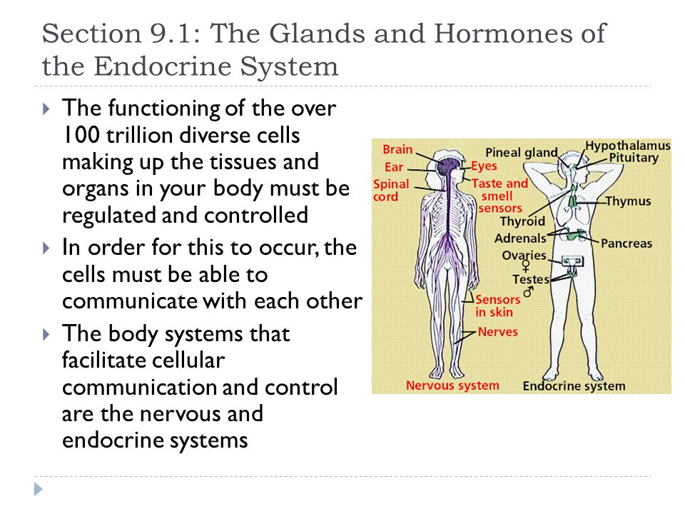 Section 9.1: The Glands and Hormones of the Endocrine System