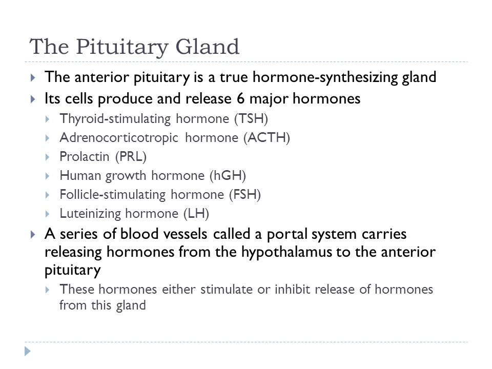 The Pituitary Gland The anterior pituitary is a true hormone-synthesizing gland. Its cells produce and release 6 major hormones.