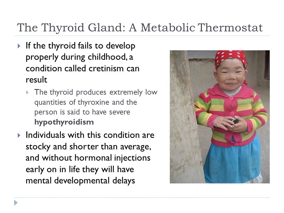 The Thyroid Gland: A Metabolic Thermostat