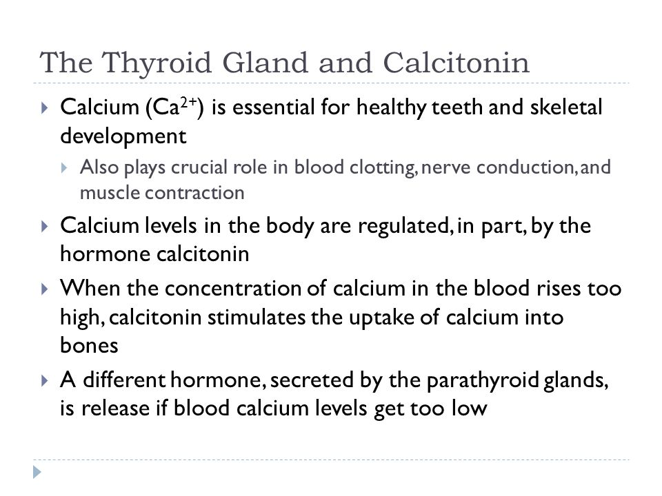The Thyroid Gland and Calcitonin