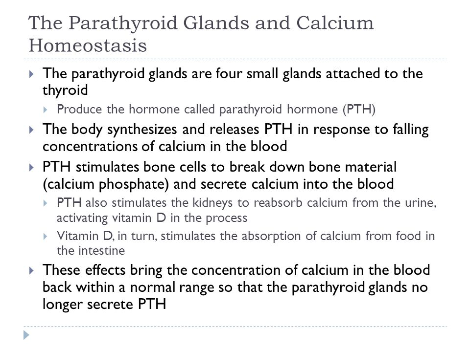 The Parathyroid Glands and Calcium Homeostasis
