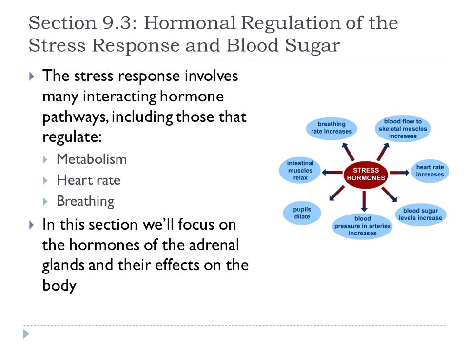 Section 9.3: Hormonal Regulation of the Stress Response and Blood Sugar