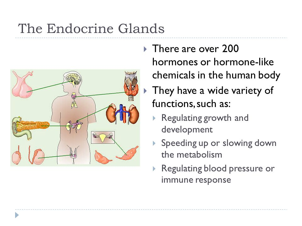 The Endocrine Glands There are over 200 hormones or hormone-like chemicals in the human body. They have a wide variety of functions, such as: