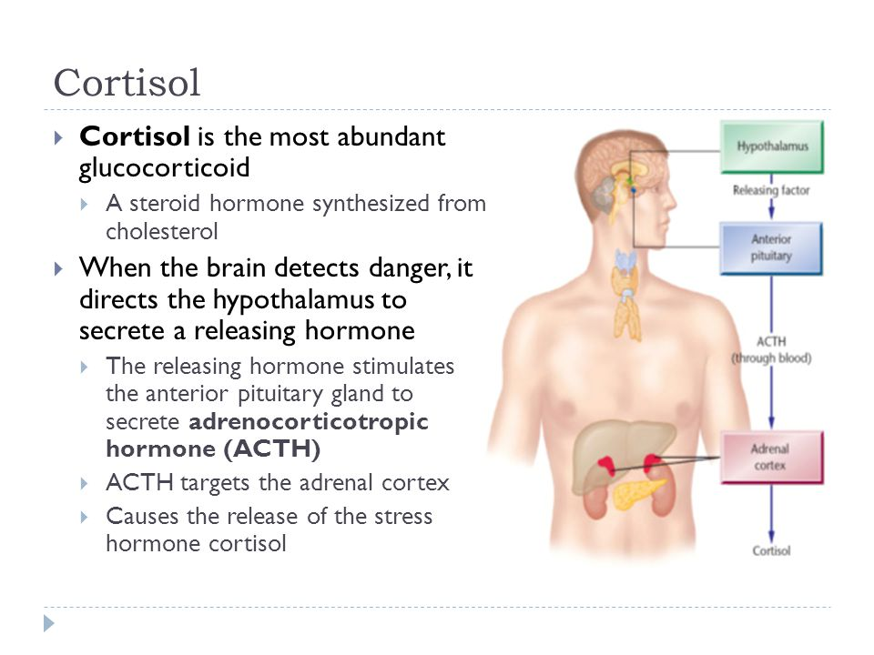 Cortisol Cortisol is the most abundant glucocorticoid
