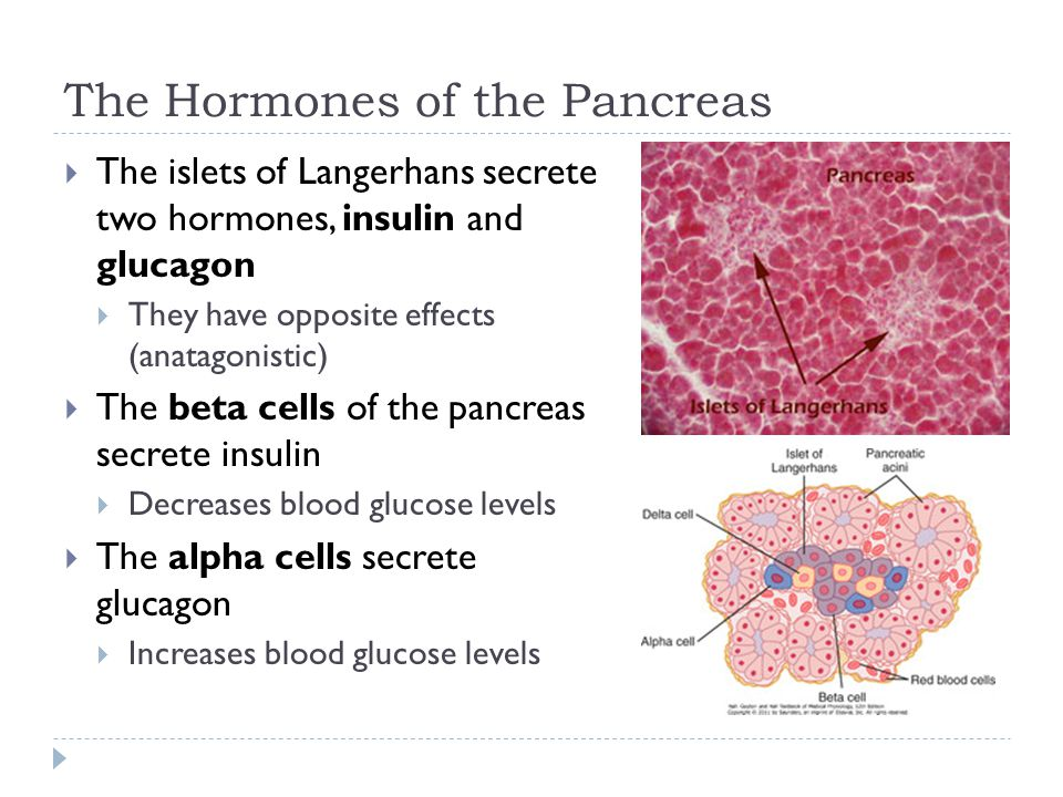 The Hormones of the Pancreas