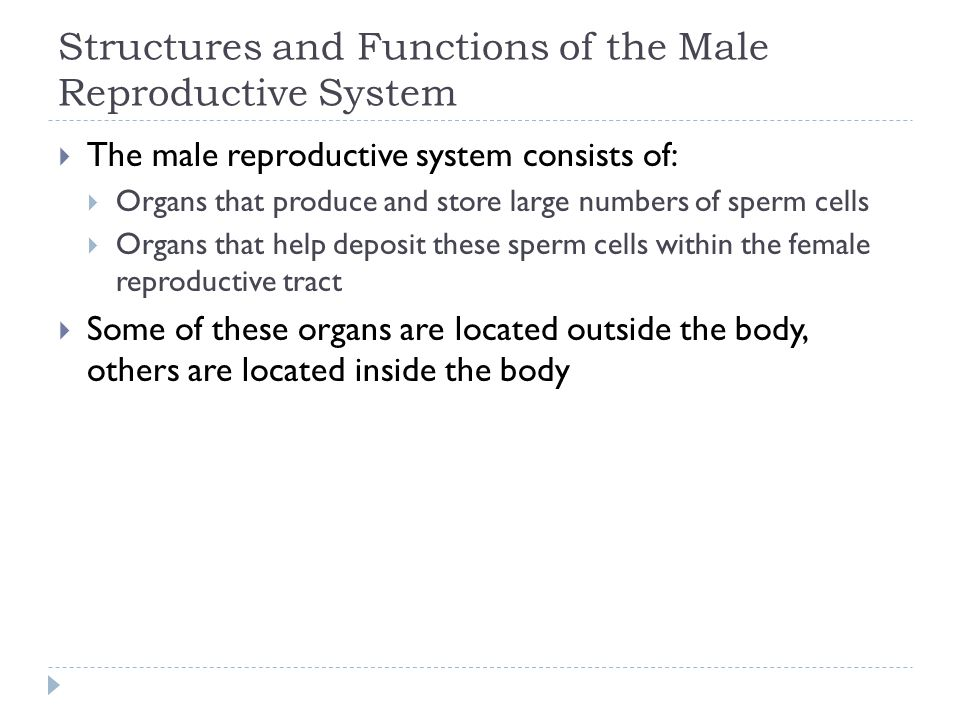 Structures and Functions of the Male Reproductive System