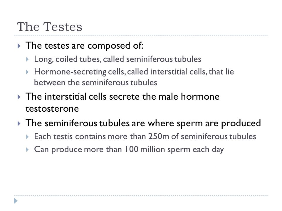 The Testes The testes are composed of: