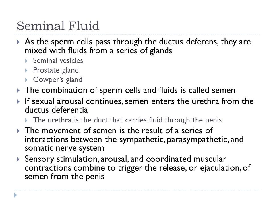 Seminal Fluid As the sperm cells pass through the ductus deferens, they are mixed with fluids from a series of glands.