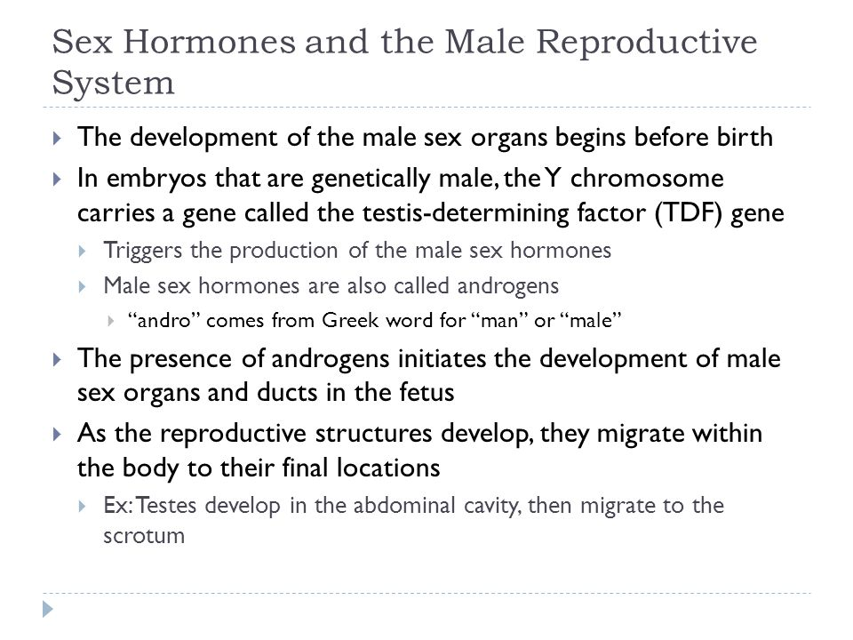 Sex Hormones and the Male Reproductive System