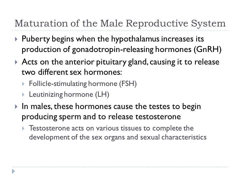 Maturation of the Male Reproductive System
