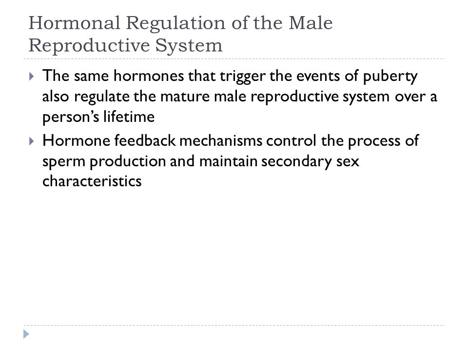 Hormonal Regulation of the Male Reproductive System