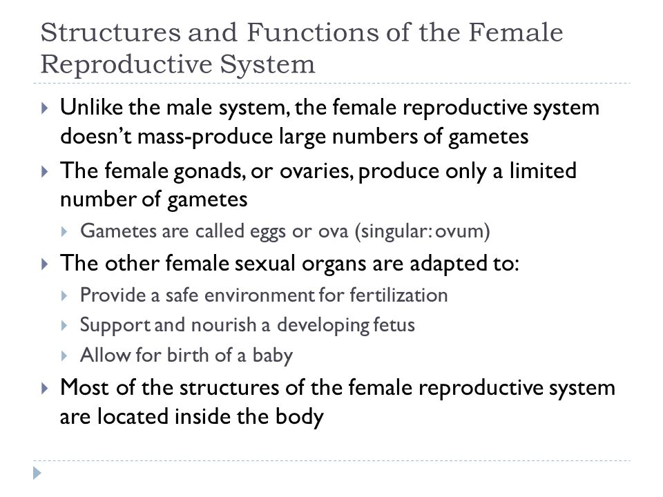Structures and Functions of the Female Reproductive System