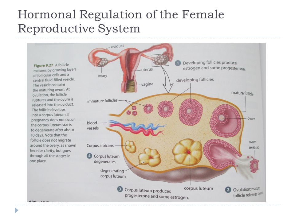 Hormonal Regulation of the Female Reproductive System