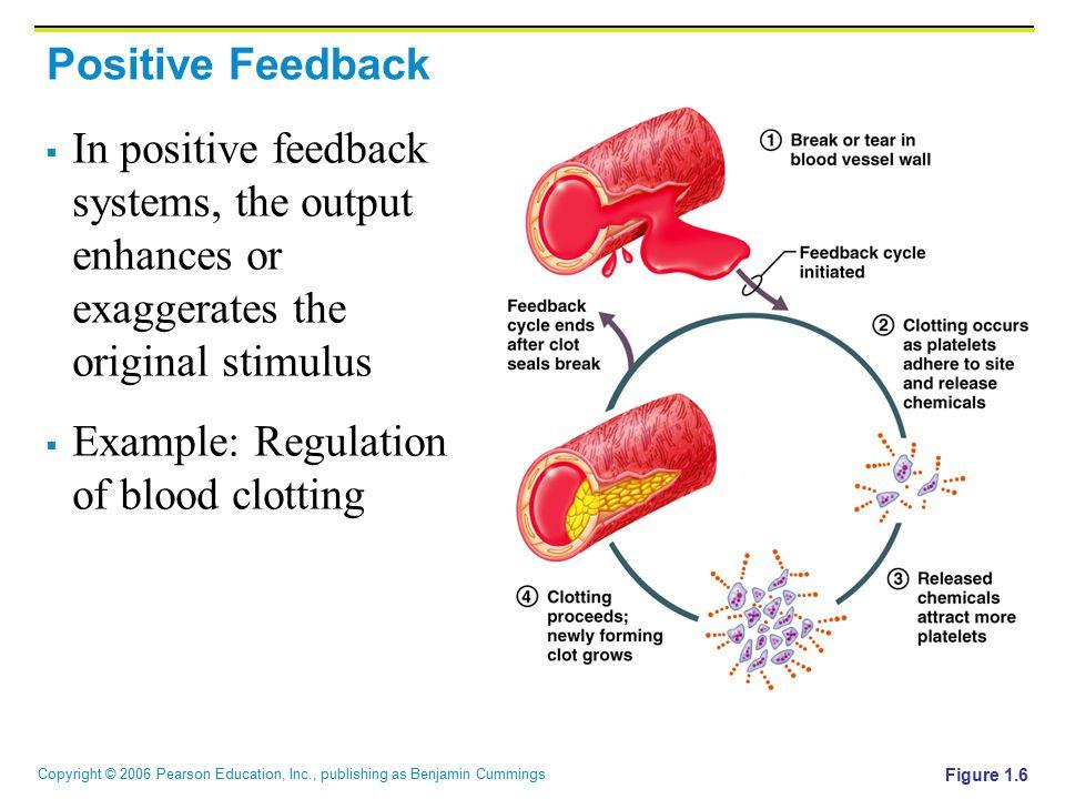 Example: Regulation of blood clotting