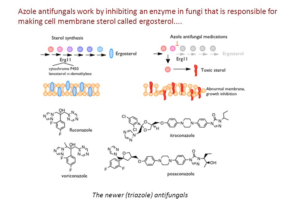 Azole antifungals work by inhibiting an enzyme in fungi that is responsible for making cell membrane sterol called ergosterol....