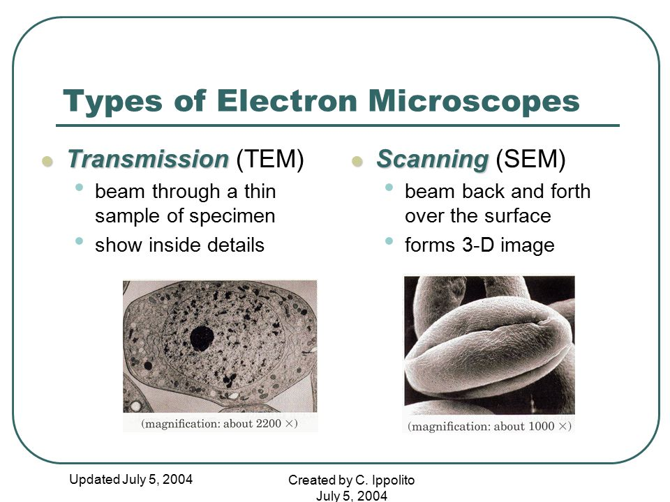 Types of Electron Microscopes