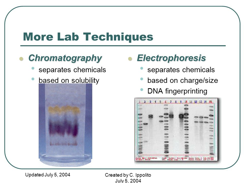 More Lab Techniques Chromatography Electrophoresis separates chemicals